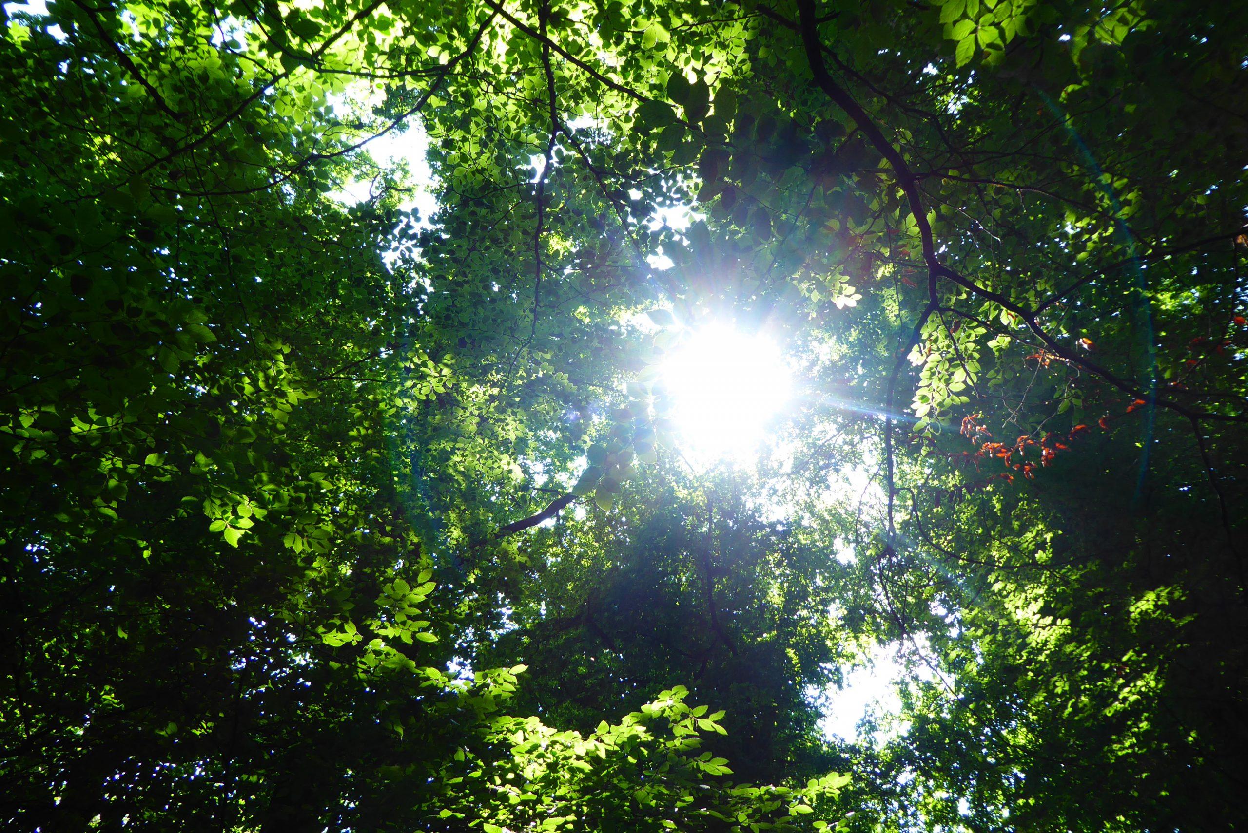 Waldbaden - Shinrin Yoku