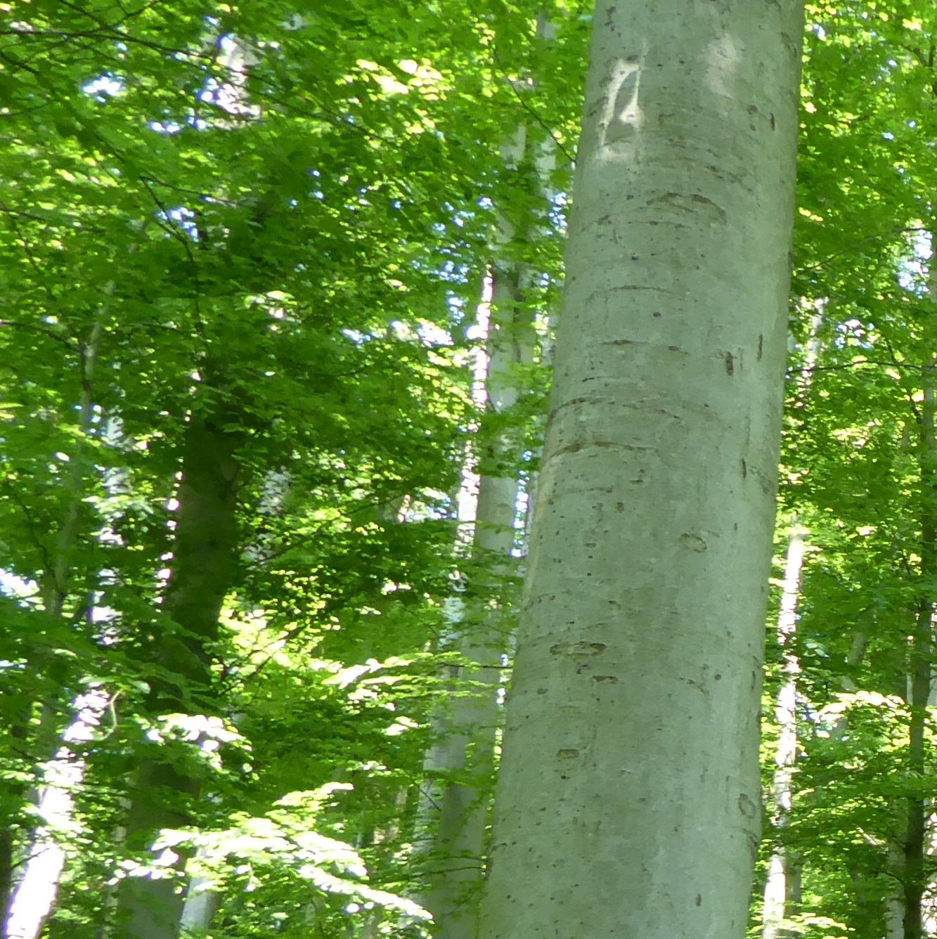 - Kein normaler Waldspaziergang oder Sport im Wald