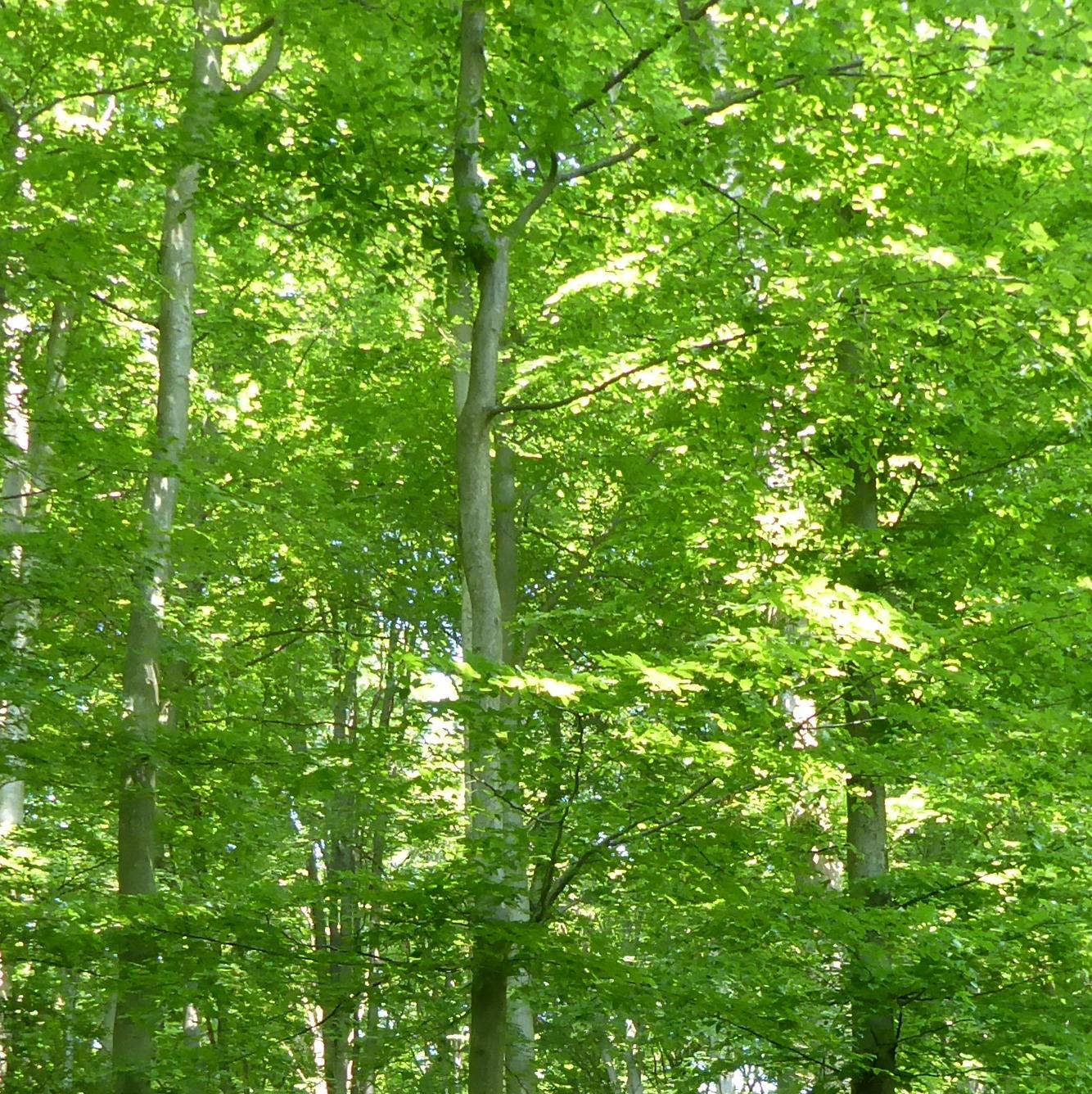 das achtsame, absichtslose Schlendern und Verweilen im Wald, bei dem wir alle Sinne weit öffnen