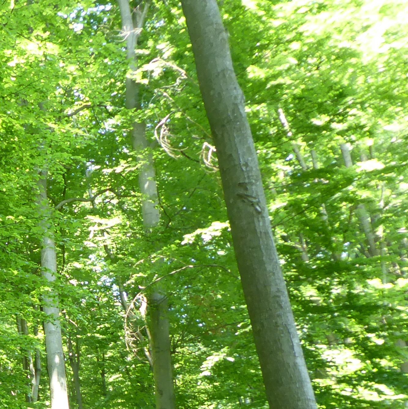 - Kein Yoga im Wald oder baden im Waldsee