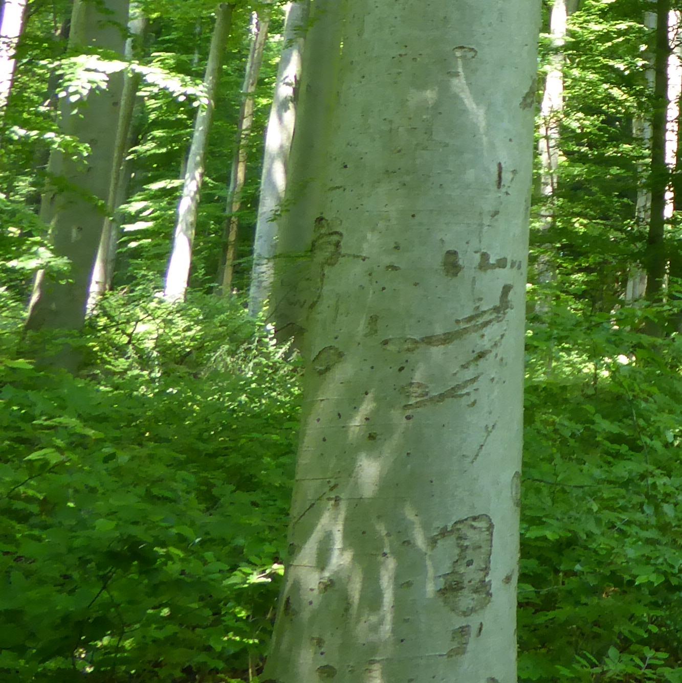 - Keine Waldpädagogik oder ein Naturcoaching